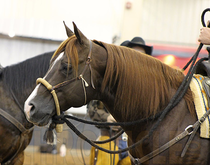OQHA to Host New AQHA Versatility Ranch Horse Show