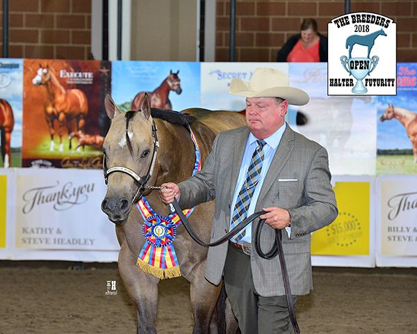 Breeders Halter Futurity Announces Partnership With APHA For $20,000 Bonus Payout