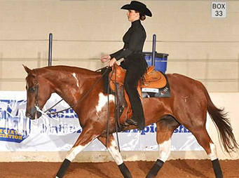 NCEA – Balancing Collegiate Competition With Breed Show Aspirations