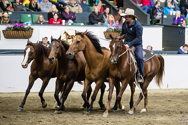 Versatility Competition, Clinics, Performances, and More at Equine Affaire this April