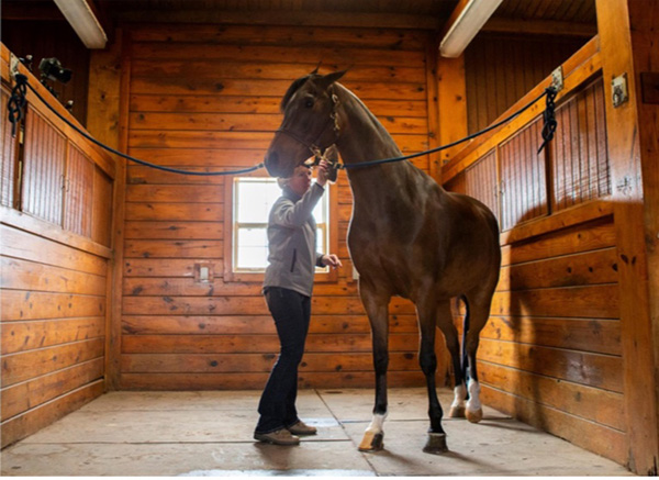 Is Your Horse Misbehaving? Consider the Possibility of Stomach Ulcers