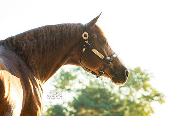 In Loving Memory of AQHA/APHA Stallion, Double Up Investment