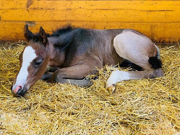 EC Foal Photo of the Day- He's Got Mojo!