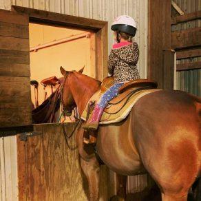 Defining Horse Jargon- Beginning Rider Terms
