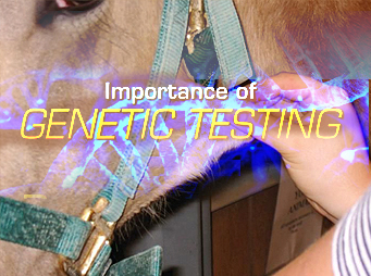 The Importance of Genetic Testing