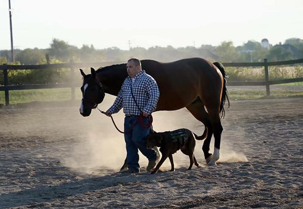 Just a Man, a Horse, and His Dog- First Ever AQHA EWD Showmanship Trio