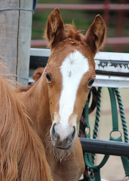 EC Foal Photo of the Day- Milk Mustache!