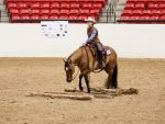 AQHA Central and East Level 1 Championship Results