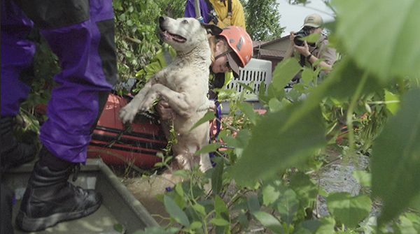 American Humane Rescue Team Works to Save Animal Victims of Oklahoma Flooding