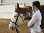 Around the Ring Photos and Results- Pinto World Show- June 12th