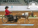 Around the Ring Photos and Results- Pinto World Show- June 13th
