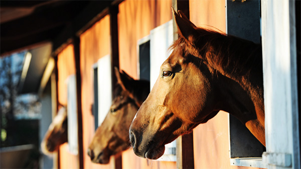 A Stable Stomach- Equine Ulcer Prevention