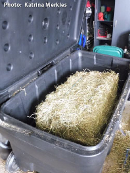 Dry, Soaked, or Steamed Hay?