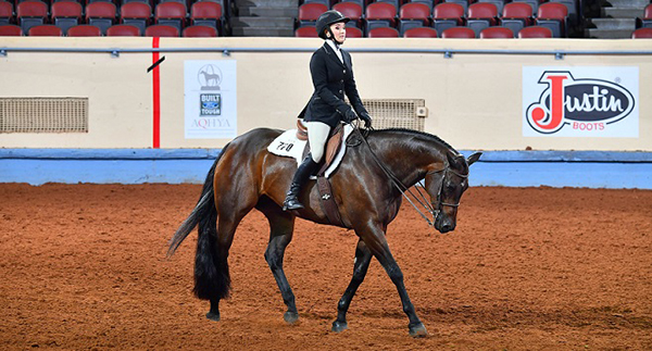 Zips Bossy Chip Has Earned Most Points in AQHA History