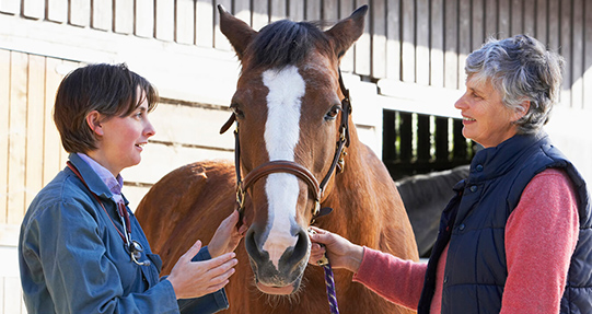 Chemo is a Go For Treating Equine Lymphoma