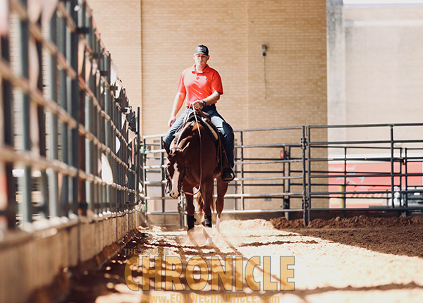 Final Around the Ring Photos- 2019 APHA World Show