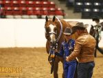 2019 QH Congress- Youth Aged Geldings