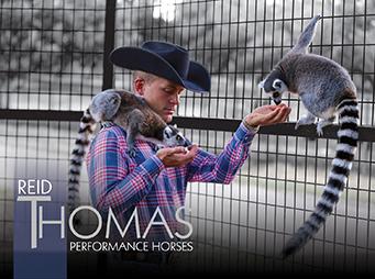Reid Thomas Performance Horses – Not Your Average Horse Trainer