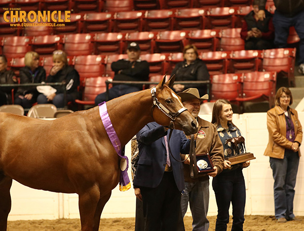 EC TV- Grand Champion Mare- Shes That Radiant