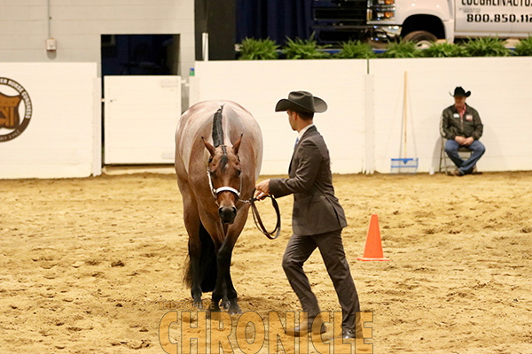 2019 QH Congress Patterns Now Available