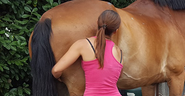 Gelding Scars and the Trouble They Cause…