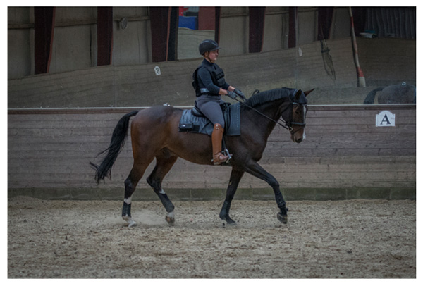 Study Examines Equine Response to Rider Weight Increase