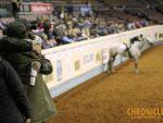2019 AQHA World- Senior Hunter Under Saddle