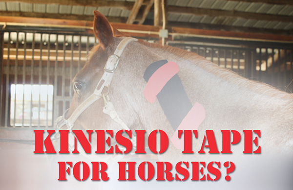 Kinesio Tape For Horses? – When Muscles Need Extra Support
