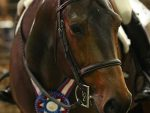 2019 AQHA World- Amateur Equitation