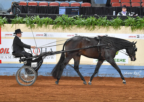 Blue Kahlua Named AQHA World Superhorse For Second Year in a Row
