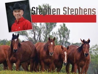 Stephen Stephens: A passion for Horses drives him to the top