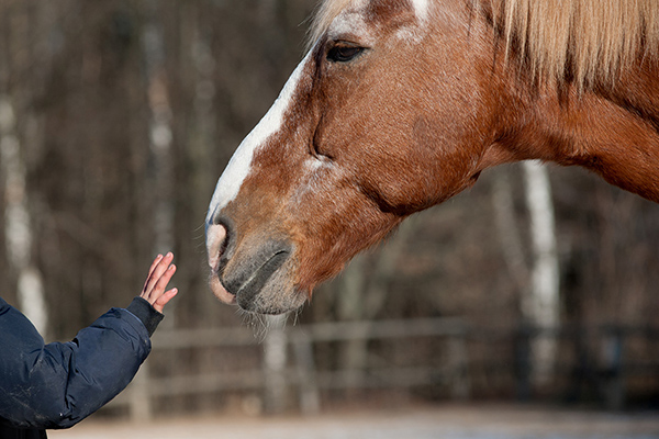 Pilot Study Shows Horses May Improve Childhood Obesity Therapy