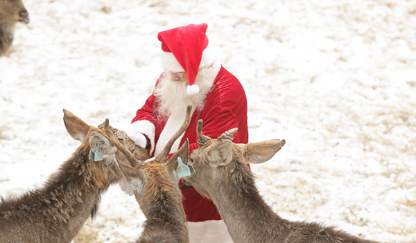 Vet Visits North Pole to Confirm Santa's Reindeer are Cleared For Christmas Flight