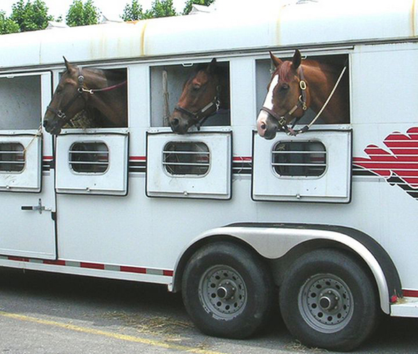 How Safe is Your Horse Trailer, Really?