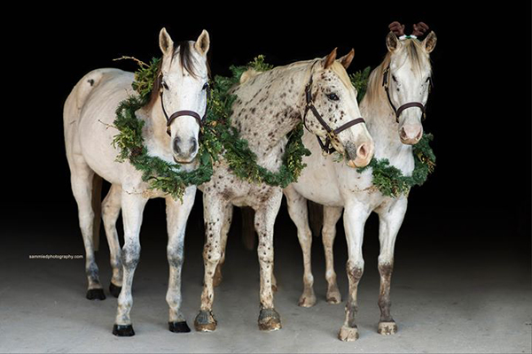 EC Photo of the Day- We Three Kings