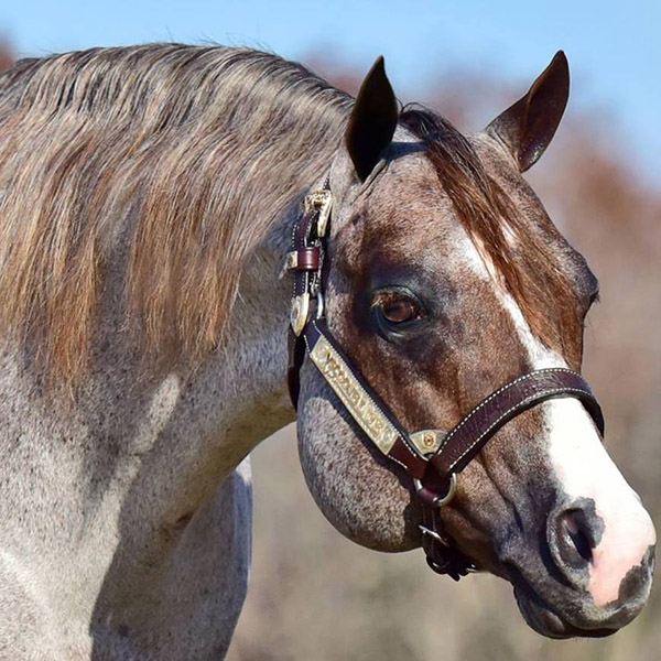 Kathy Tobin is Proud, New Owner of AQHA Sire, VS Code Blue