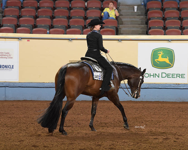 Everything You Need to Know About AQHA Level 1 Championships