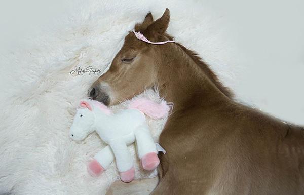 EC Photo of the Day- It's Foal Season!