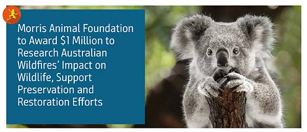 MAF Awards $1 Million to Research Australian Wildfires' Impact on Wildlife