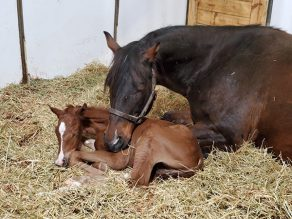 EC Photo of the Day- Nap Time!