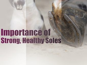 Importance of Strong, Healthy Soles