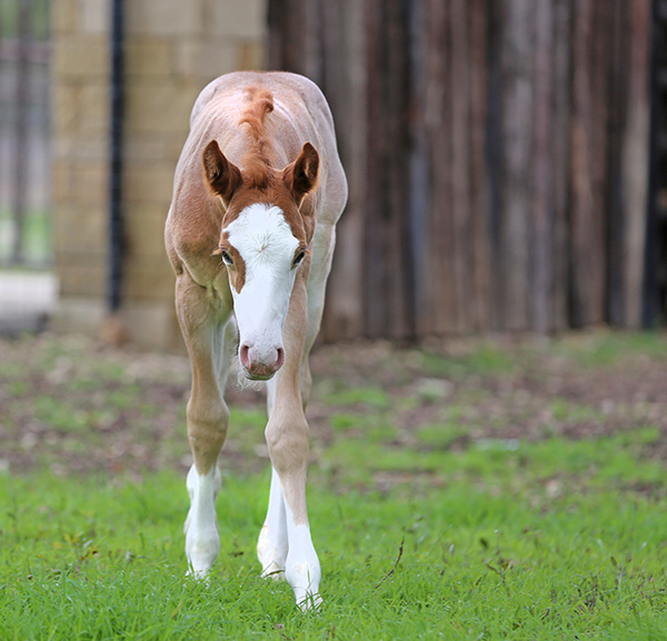 EC Foal Photo of the Day- Cupid Has Arrived!