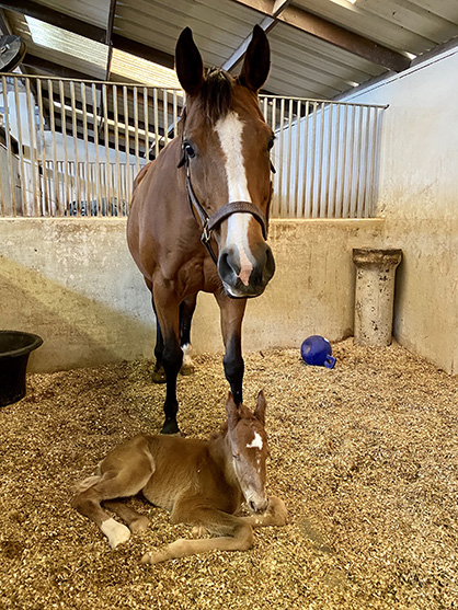 EC Foal Photo of the Day- Keeping Watch