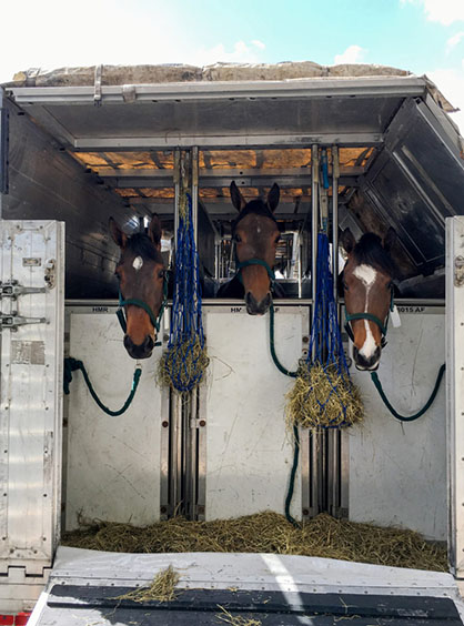 Equine Air Transportation During COVID-19: What You Need To Know
