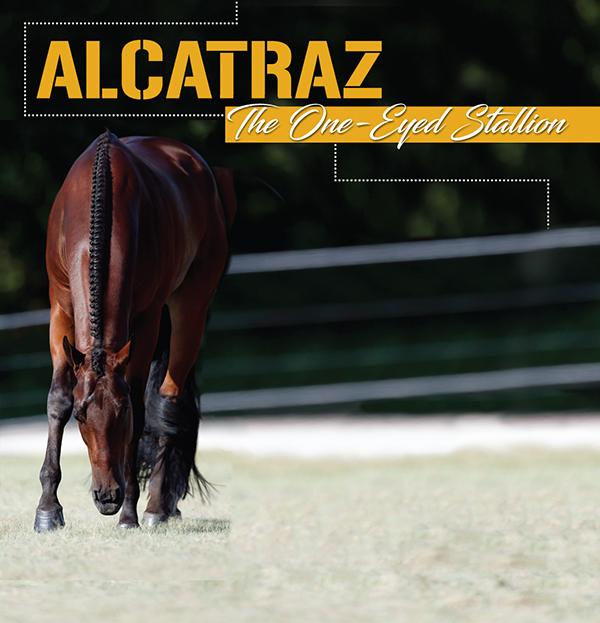Alcatraz – The One-Eyed Stallion