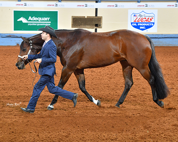 AQHA All Around Winner- Tony Anderman and Solo Invested