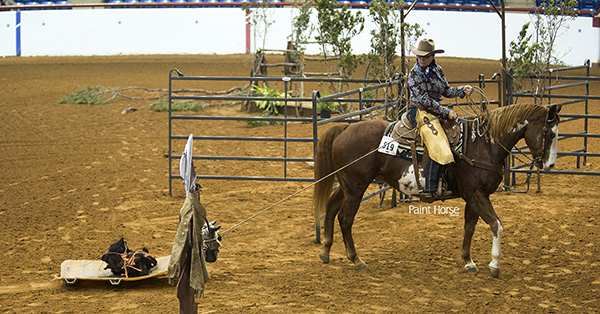 APHA Board of Directors Modifies Trail Obstacle Requirements