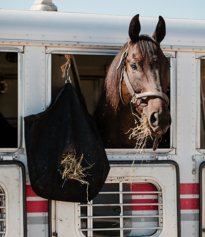 On the Road Again: Don't Forget Your Show Horse's Respiratory Health When Trailering