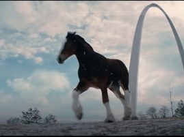 Budweiser Clydesdale Video- Together We Will Run Again