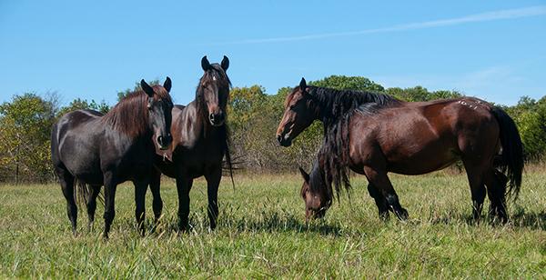 Help Horses Avoid Heat Stress